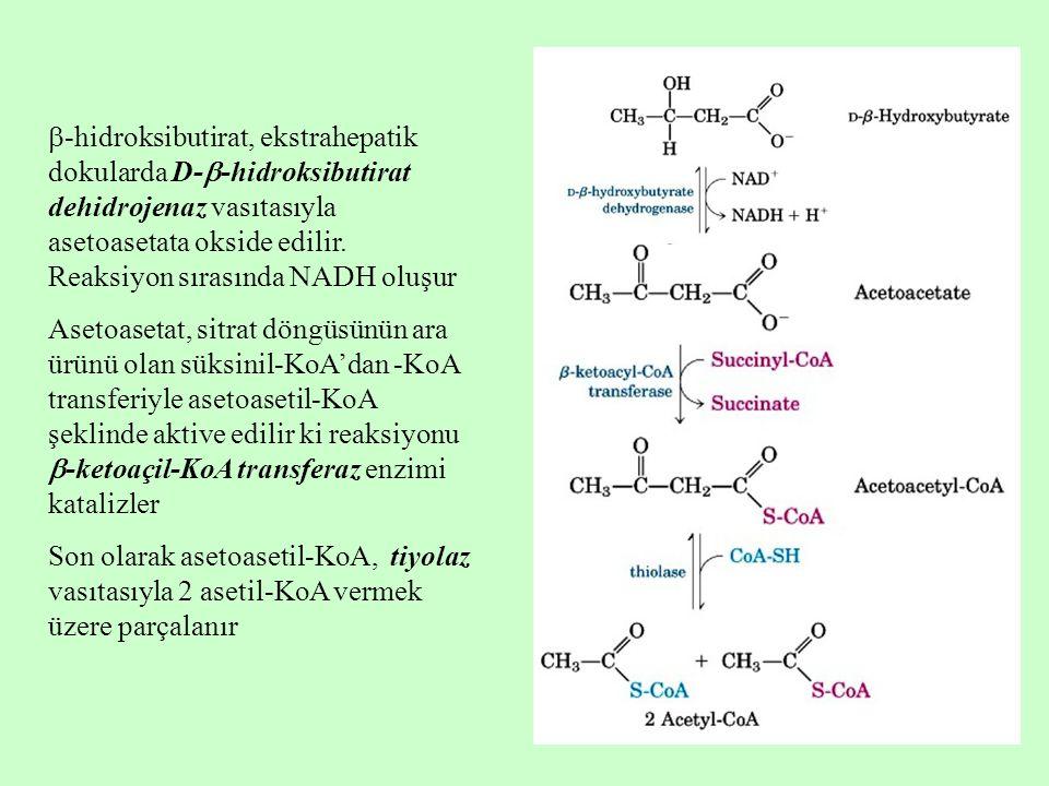  -hidroksibutirat, ekstrahepatik dokularda D-  -hidroksibutirat dehidrojenaz vasıtasıyla asetoasetata okside edilir. Reaksiyon sırasında NADH oluşur