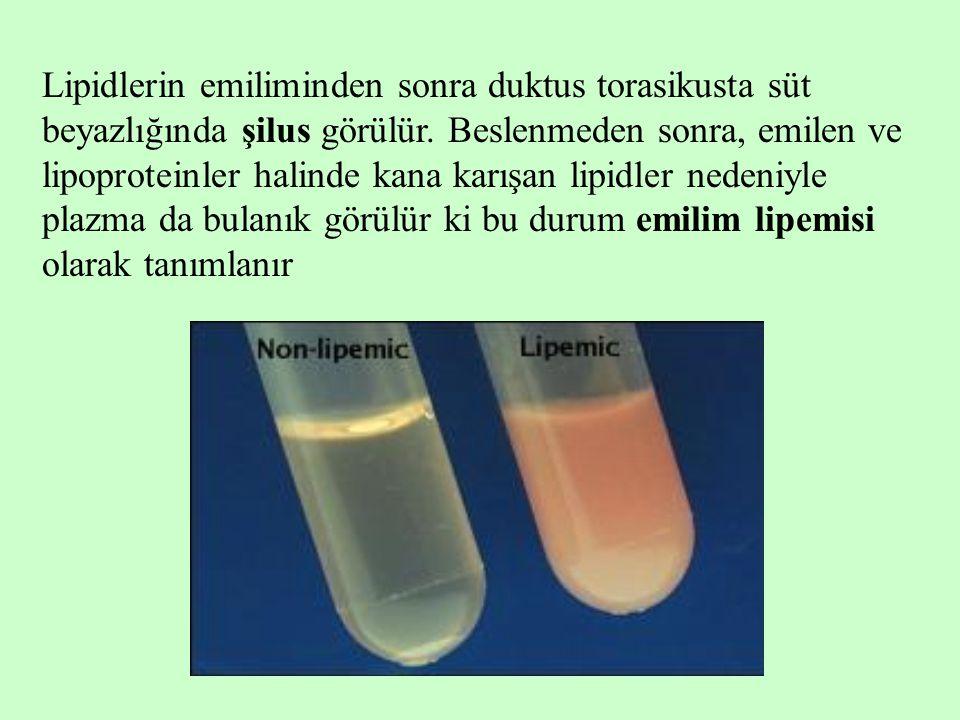 Lipidlerin emiliminden sonra duktus torasikusta süt beyazlığında şilus görülür. Beslenmeden sonra, emilen ve lipoproteinler halinde kana karışan lipid