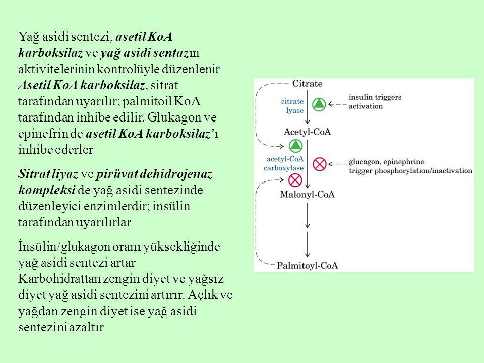 Yağ asidi sentezi, asetil KoA karboksilaz ve yağ asidi sentazın aktivitelerinin kontrolüyle düzenlenir Asetil KoA karboksilaz, sitrat tarafından uyarı