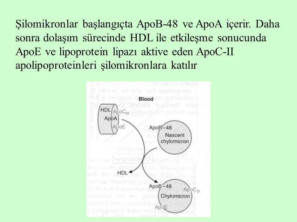 Şilomikronlar başlangıçta ApoB-48 ve ApoA içerir. Daha sonra dolaşım sürecinde HDL ile etkileşme sonucunda ApoE ve lipoprotein lipazı aktive eden ApoC