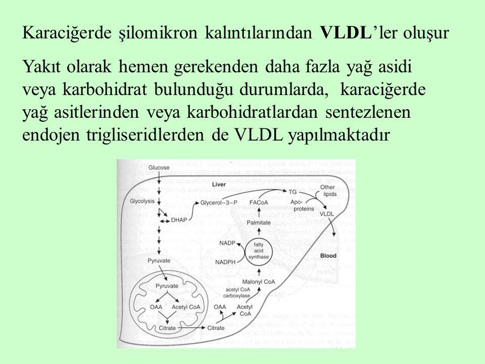 Karaciğerde şilomikron kalıntılarından VLDL'ler oluşur Yakıt olarak hemen gerekenden daha fazla yağ asidi veya karbohidrat bulunduğu durumlarda, karac