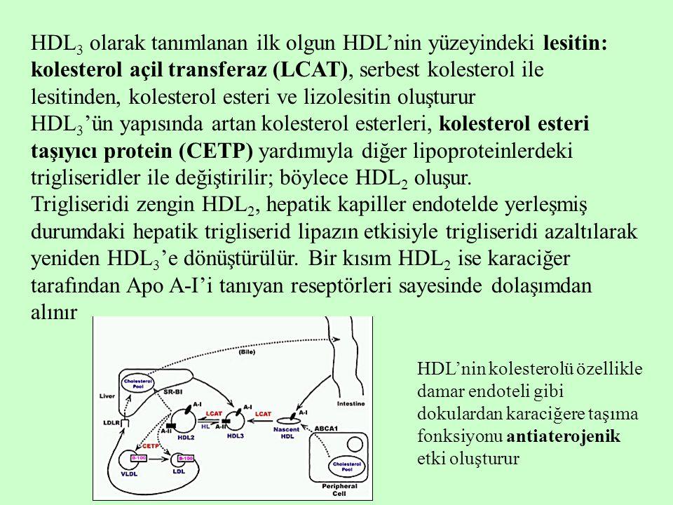 HDL 3 olarak tanımlanan ilk olgun HDL'nin yüzeyindeki lesitin: kolesterol açil transferaz (LCAT), serbest kolesterol ile lesitinden, kolesterol esteri