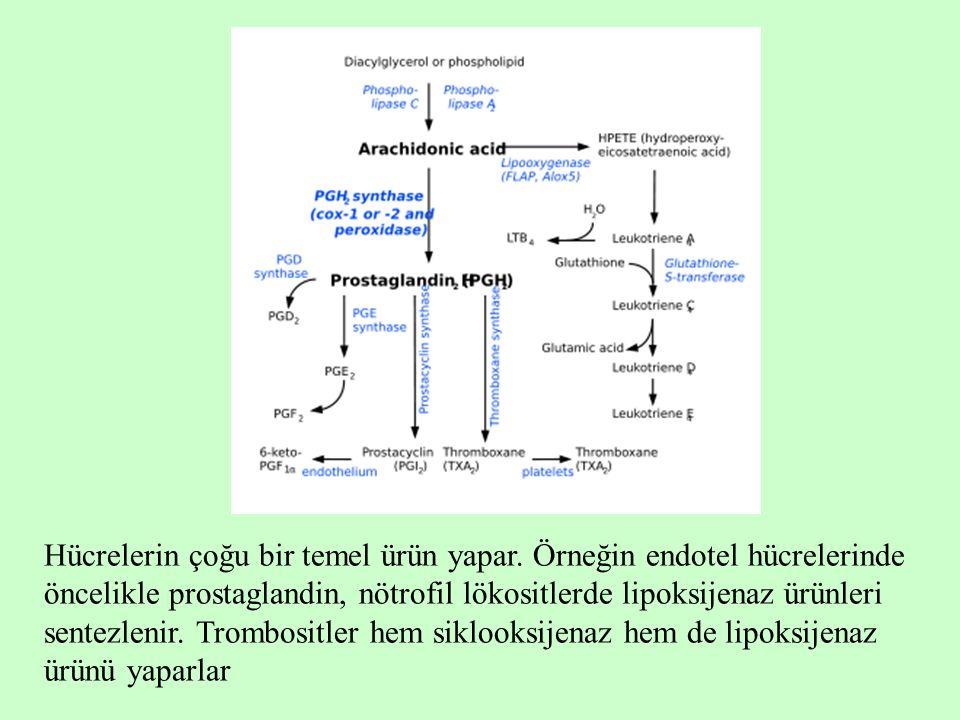 Hücrelerin çoğu bir temel ürün yapar. Örneğin endotel hücrelerinde öncelikle prostaglandin, nötrofil lökositlerde lipoksijenaz ürünleri sentezlenir. T