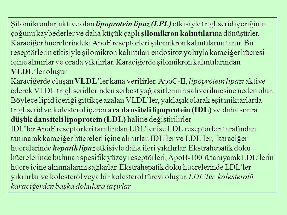 Şilomikronlar, aktive olan lipoprotein lipaz (LPL) etkisiyle trigliserid içeriğinin çoğunu kaybederler ve daha küçük çaplı şilomikron kalıntılarına dö
