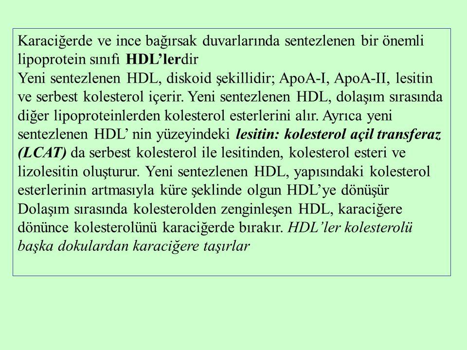 Karaciğerde ve ince bağırsak duvarlarında sentezlenen bir önemli lipoprotein sınıfı HDL'lerdir Yeni sentezlenen HDL, diskoid şekillidir; ApoA-I, ApoA-