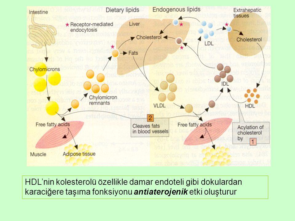 HDL'nin kolesterolü özellikle damar endoteli gibi dokulardan karaciğere taşıma fonksiyonu antiaterojenik etki oluşturur