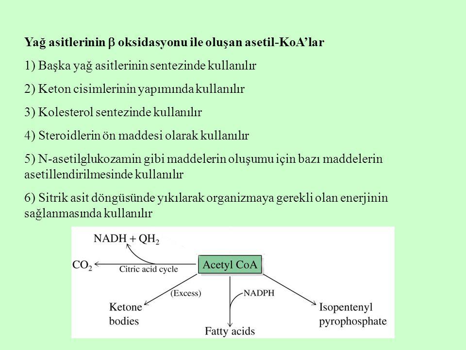 Yağ asitlerinin  oksidasyonu ile oluşan asetil-KoA'lar 1) Başka yağ asitlerinin sentezinde kullanılır 2) Keton cisimlerinin yapımında kullanılır 3) K