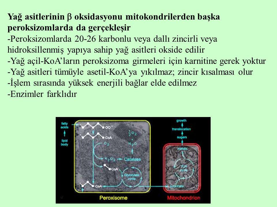 Yağ asitlerinin  oksidasyonu mitokondrilerden başka peroksizomlarda da gerçekleşir -Peroksizomlarda 20-26 karbonlu veya dallı zincirli veya hidroksil