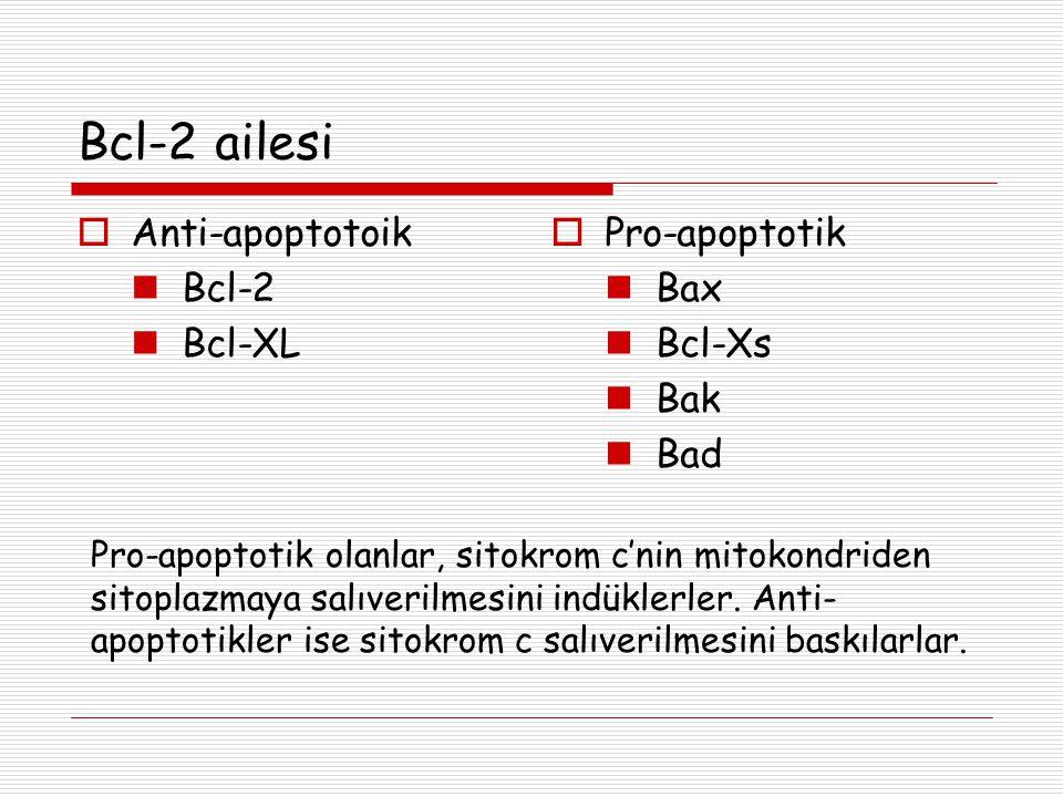 Bcl-2 ailesi  Anti-apoptotoik Bcl-2 Bcl-XL  Pro-apoptotik Bax Bcl-Xs Bak Bad Pro-apoptotik olanlar, sitokrom c'nin mitokondriden sitoplazmaya salıve