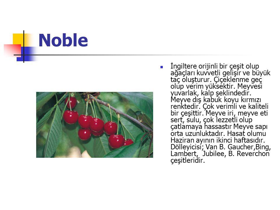 Noble İngiltere orijinli bir çeşit olup ağaçları kuvvetli gelişir ve büyük taç oluşturur.