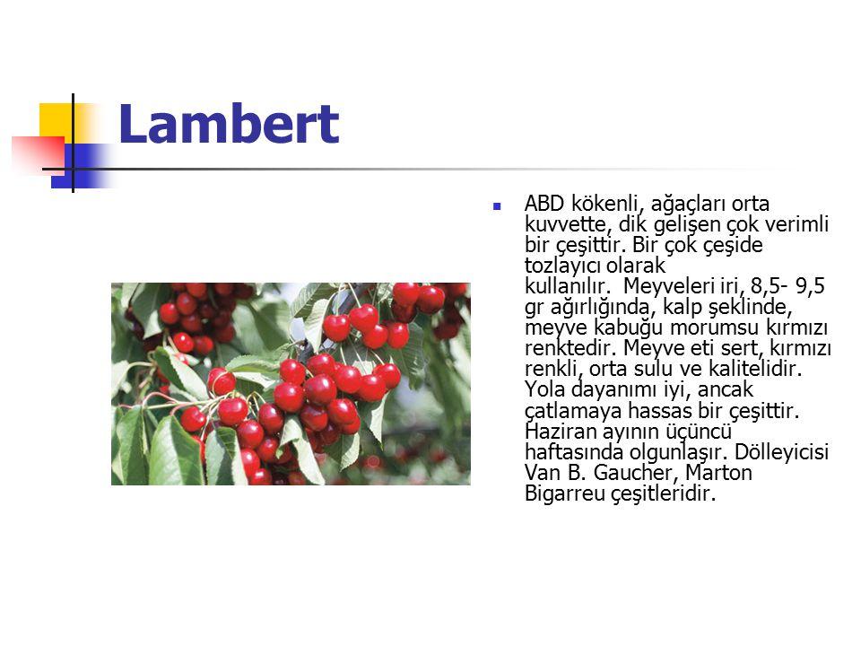 Lambert ABD kökenli, ağaçları orta kuvvette, dik gelişen çok verimli bir çeşittir.