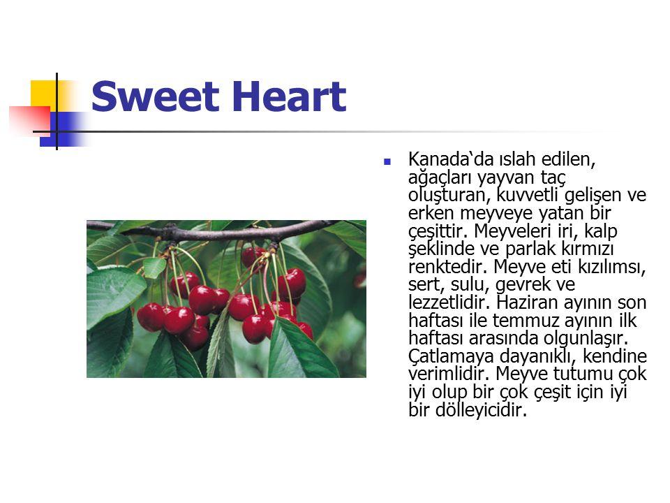 Sweet Heart Kanada'da ıslah edilen, ağaçları yayvan taç oluşturan, kuvvetli gelişen ve erken meyveye yatan bir çeşittir.