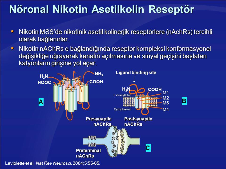 Nöronal Nikotin Asetilkolin Reseptör  Nikotin MSS'de nikotinik asetil kolinerjik reseptörlere (nAchRs) tercihli olarak bağlanırlar.  Nikotin nAChRs