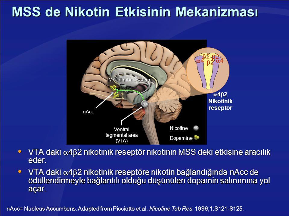 MSS de Nikotin Etkisinin Mekanizması  VTA daki  4  2 nikotinik reseptör nikotinin MSS deki etkisine aracılık eder.  VTA daki  4  2 nikotinik res
