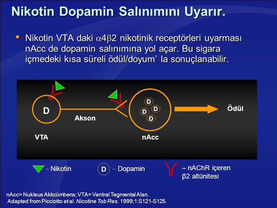 Nikotin Dopamin Salınımını Uyarır.  Nikotin VTA daki  4  2 nikotinik receptörleri uyarması nAcc de dopamin salınımına yol açar. Bu sigara içmedeki