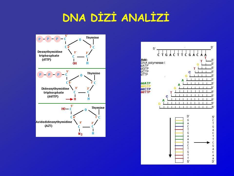 DNA DİZİ ANALİZİ