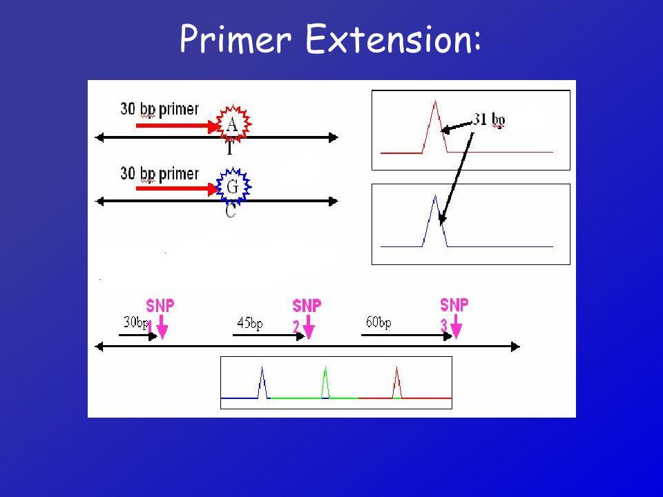 Primer Extension: