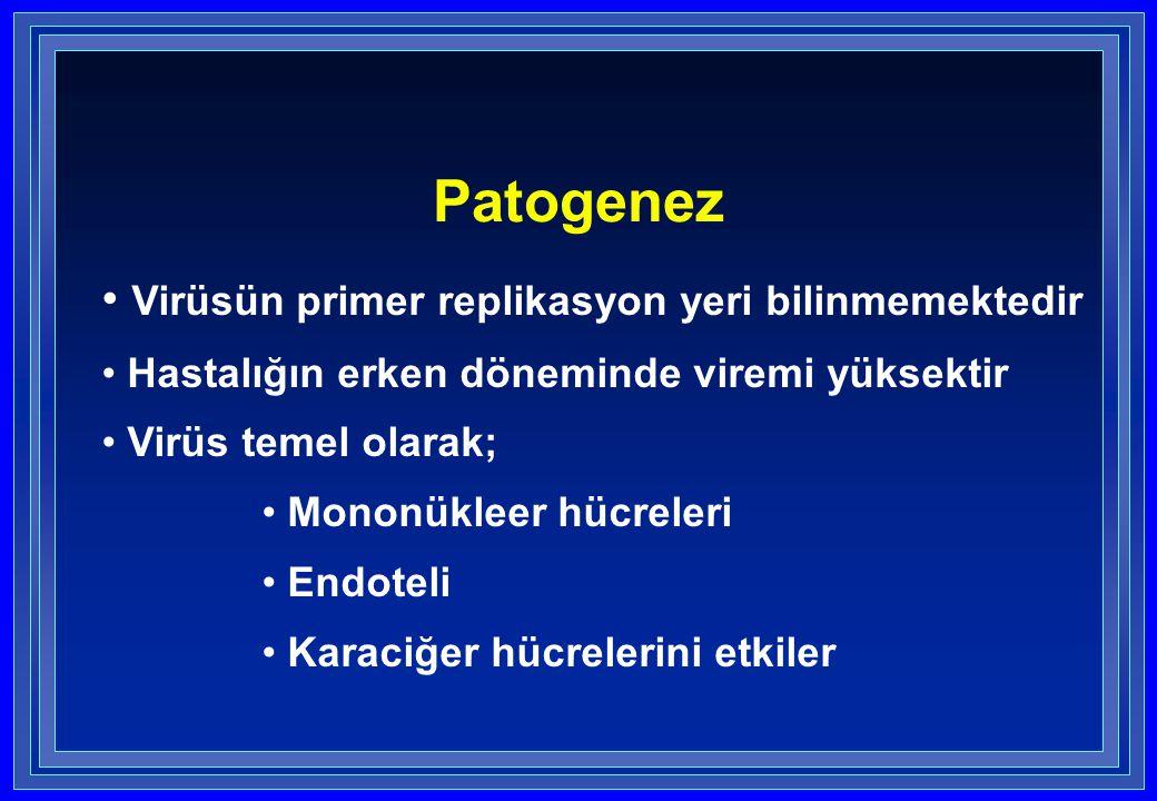 Patogenez Virüsün primer replikasyon yeri bilinmemektedir Hastalığın erken döneminde viremi yüksektir Virüs temel olarak; Mononükleer hücreleri Endote