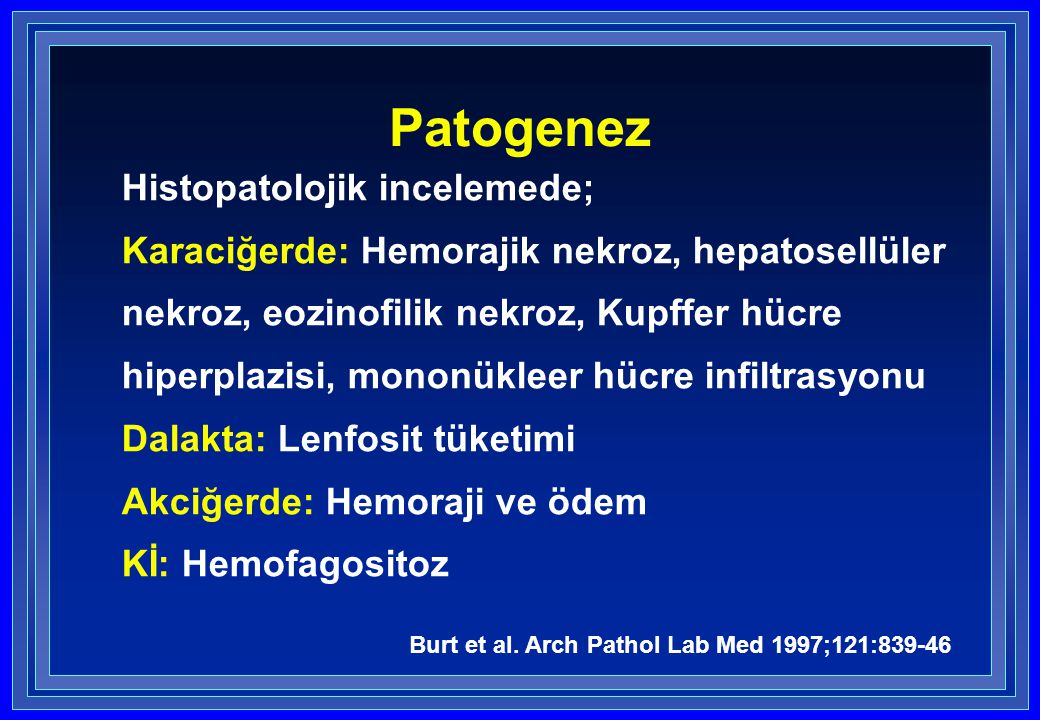 Patogenez Histopatolojik incelemede; Karaciğerde: Hemorajik nekroz, hepatosellüler nekroz, eozinofilik nekroz, Kupffer hücre hiperplazisi, mononükleer