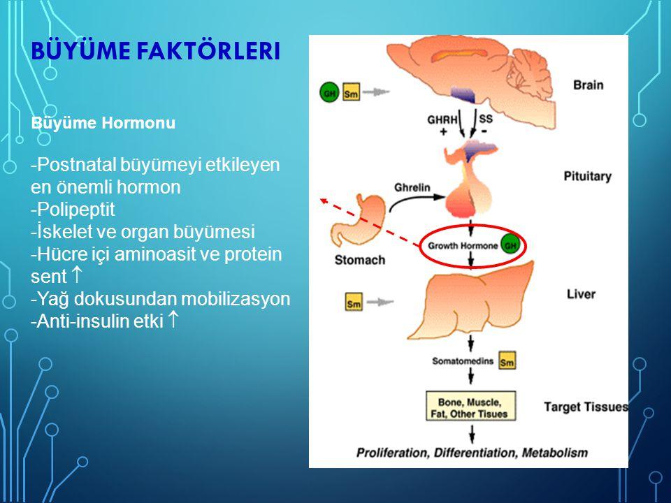 BÜYÜME FAKTÖRLERI Büyüme Hormonu Salgılatıcı Hormon -Hipotalamus arkuat nukleus Somatostatin -Esas baskılayıcı Büyüme hormonu hedef organlarındaki etkilerini çoğu karaciğerde sentezlenen IGF ve IGFBP ler aracılığı ile gerçekleştirir.