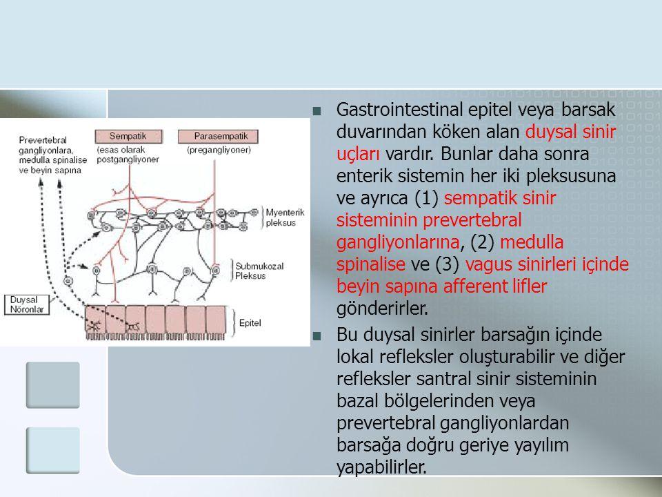 Gastrointestinal epitel veya barsak duvarından köken alan duysal sinir uçları vardır. Bunlar daha sonra enterik sistemin her iki pleksusuna ve ayrıca