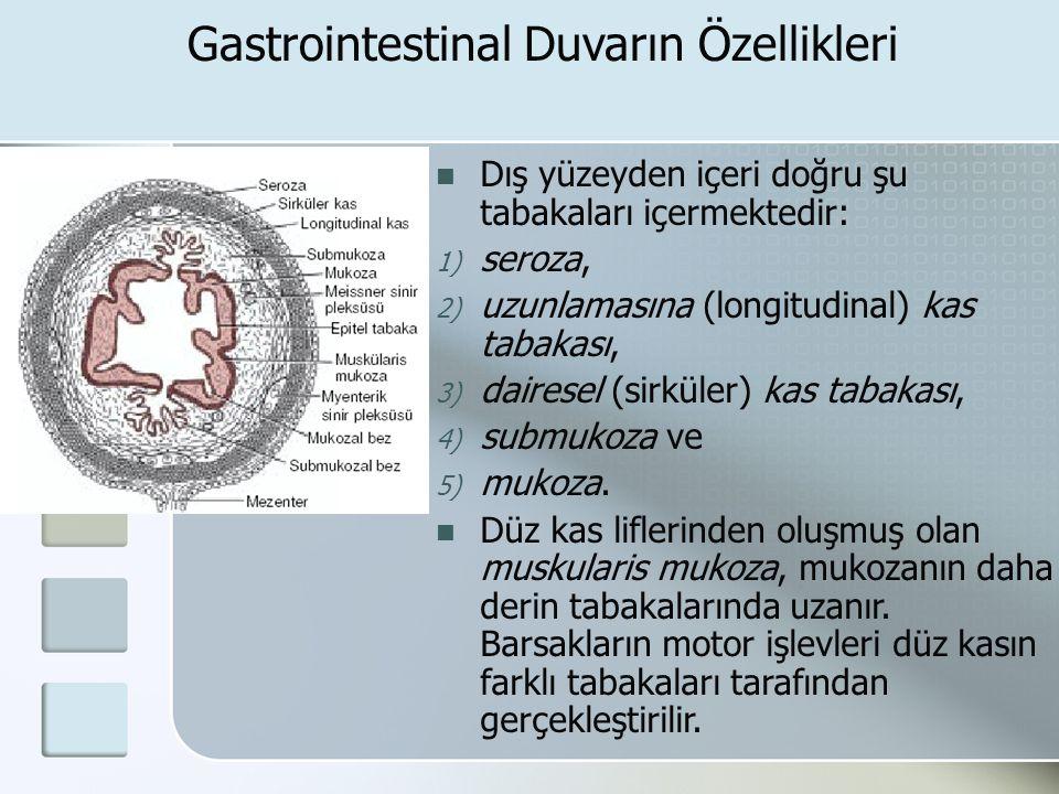 Gastrointestinal Duvarın Özellikleri Dış yüzeyden içeri doğru şu tabakaları içermektedir: 1) seroza, 2) uzunlamasına (longitudinal) kas tabakası, 3) d
