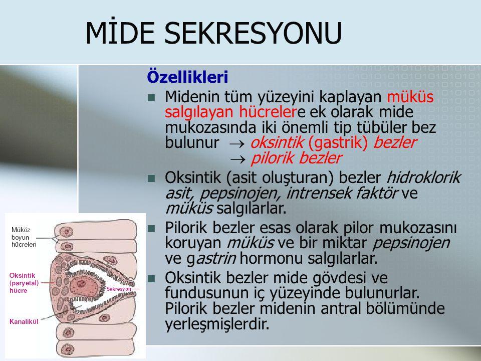 MİDE SEKRESYONU Özellikleri Midenin tüm yüzeyini kaplayan müküs salgılayan hücrelere ek olarak mide mukozasında iki önemli tip tübüler bez bulunur  o