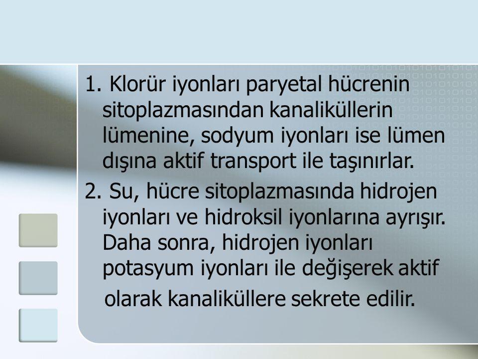 1. Klorür iyonları paryetal hücrenin sitoplazmasından kanaliküllerin lümenine, sodyum iyonları ise lümen dışına aktif transport ile taşınırlar. 2. Su,