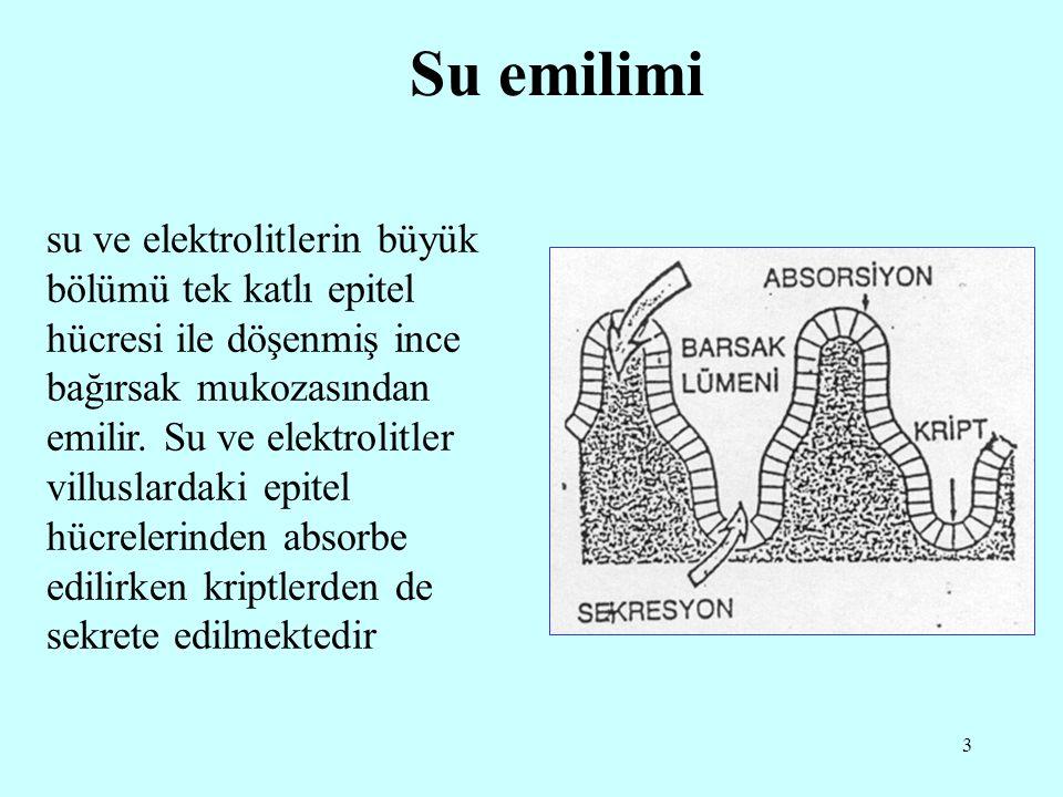 3 Su emilimi su ve elektrolitlerin büyük bölümü tek katlı epitel hücresi ile döşenmiş ince bağırsak mukozasından emilir. Su ve elektrolitler villuslar