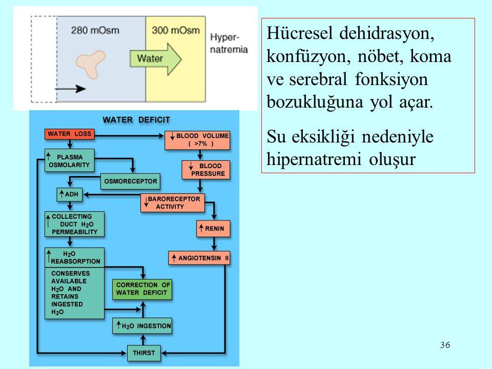 36 Hücresel dehidrasyon, konfüzyon, nöbet, koma ve serebral fonksiyon bozukluğuna yol açar.