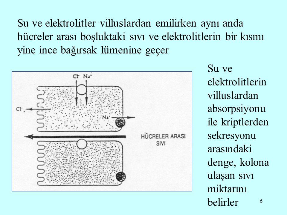 6 Su ve elektrolitler villuslardan emilirken aynı anda hücreler arası boşluktaki sıvı ve elektrolitlerin bir kısmı yine ince bağırsak lümenine geçer Su ve elektrolitlerin villuslardan absorpsiyonu ile kriptlerden sekresyonu arasındaki denge, kolona ulaşan sıvı miktarını belirler