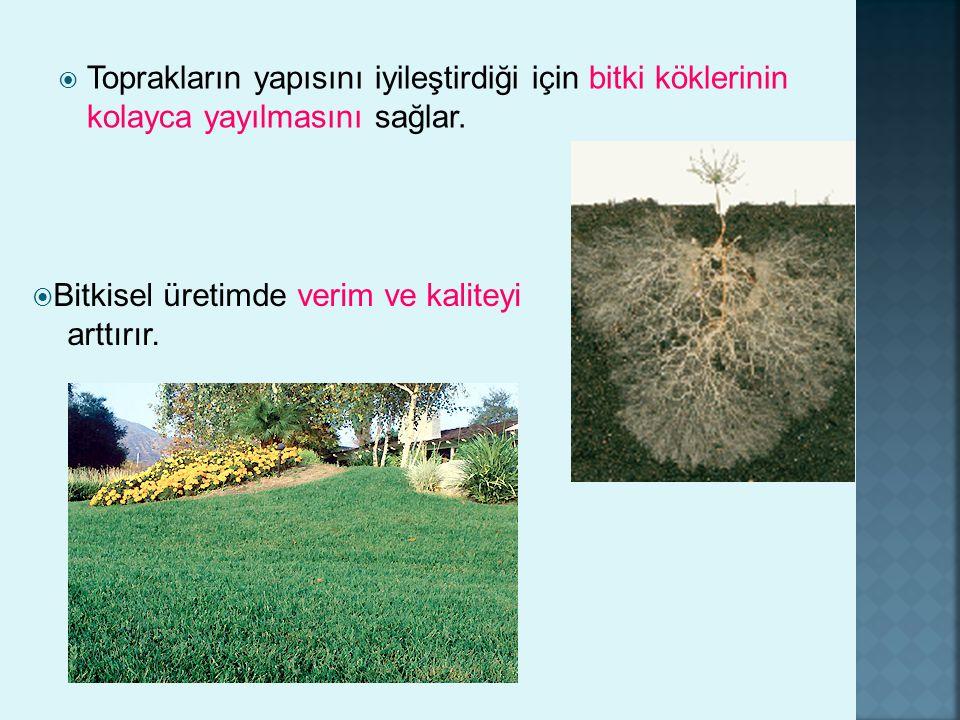  Toprakların yapısını iyileştirdiği için bitki köklerinin kolayca yayılmasını sağlar.  Bitkisel üretimde verim ve kaliteyi arttırır.