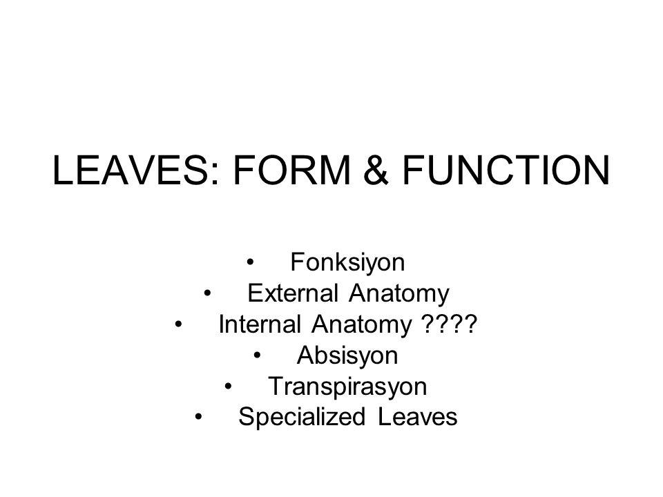 LEAVES: FORM & FUNCTION Fonksiyon External Anatomy Internal Anatomy ???.
