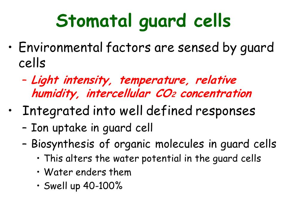 Stomatal guard cells Environmental factors are sensed by guard cells –Light intensity, temperature, relative humidity, intercellular CO 2 concentratio