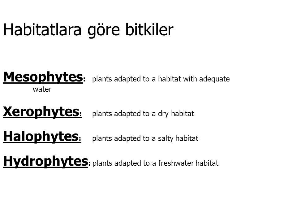 Habitatlara göre bitkiler Mesophytes : plants adapted to a habitat with adequate water Xerophytes : plants adapted to a dry habitat Halophytes : plants adapted to a salty habitat Hydrophytes : plants adapted to a freshwater habitat