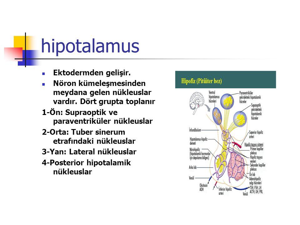 hipotalamus Ektodermden gelişir. Nöron kümeleşmesinden meydana gelen nükleuslar vardır. Dört grupta toplanır 1-Ön: Supraoptik ve paraventriküler nükle