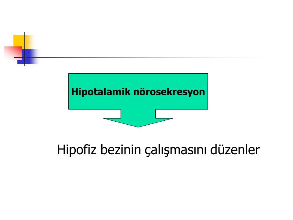 Hipofiz bezinin çalışmasını düzenler Hipotalamik nörosekresyon
