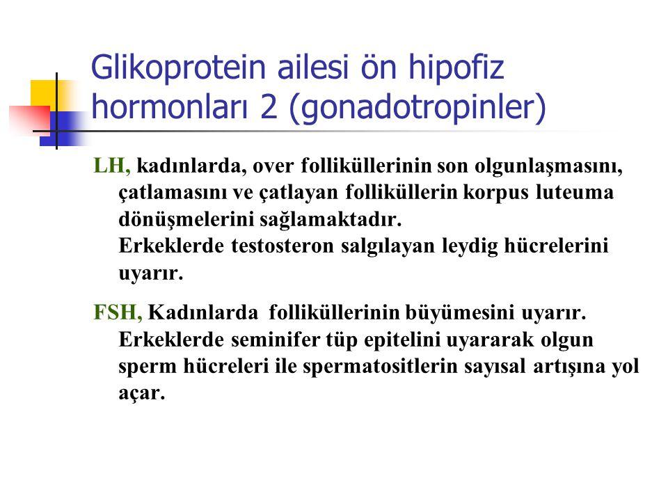 Glikoprotein ailesi ön hipofiz hormonları 2 (gonadotropinler) LH, kadınlarda, over folliküllerinin son olgunlaşmasını, çatlamasını ve çatlayan follikü