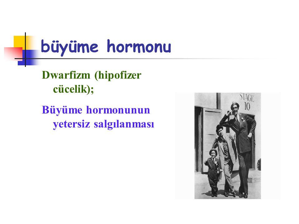 büyüme hormonu Dwarfizm (hipofizer cücelik); Büyüme hormonunun yetersiz salgılanması