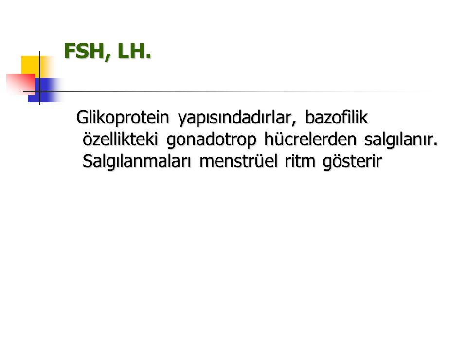 FSH, LH. Glikoprotein yapısındadırlar, bazofilik özellikteki gonadotrop hücrelerden salgılanır. Salgılanmaları menstrüel ritm gösterir Glikoprotein ya