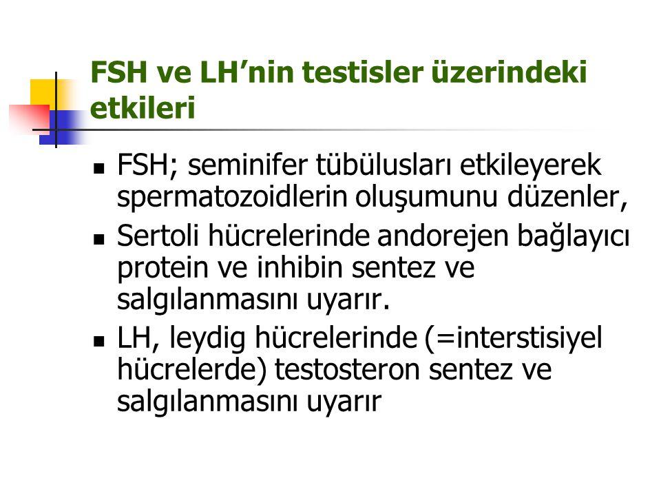 FSH ve LH'nin testisler üzerindeki etkileri FSH; seminifer tübülusları etkileyerek spermatozoidlerin oluşumunu düzenler, Sertoli hücrelerinde andoreje