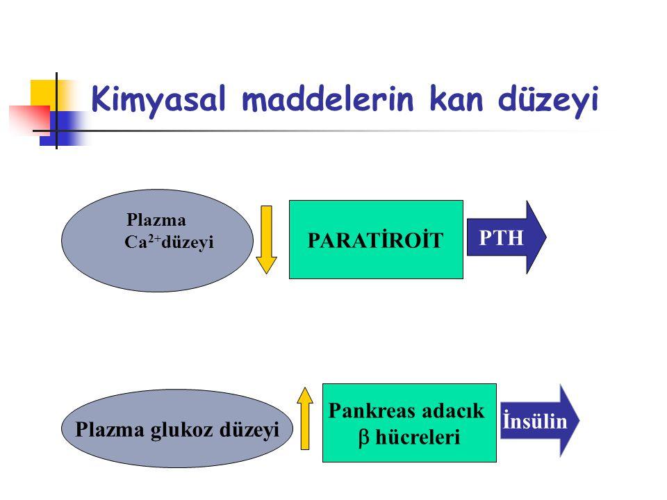 Kimyasal maddelerin kan düzeyi Plazma Ca 2+ düzeyi PARATİROİT PTH Plazma glukoz düzeyi Pankreas adacık  hücreleri İnsülin