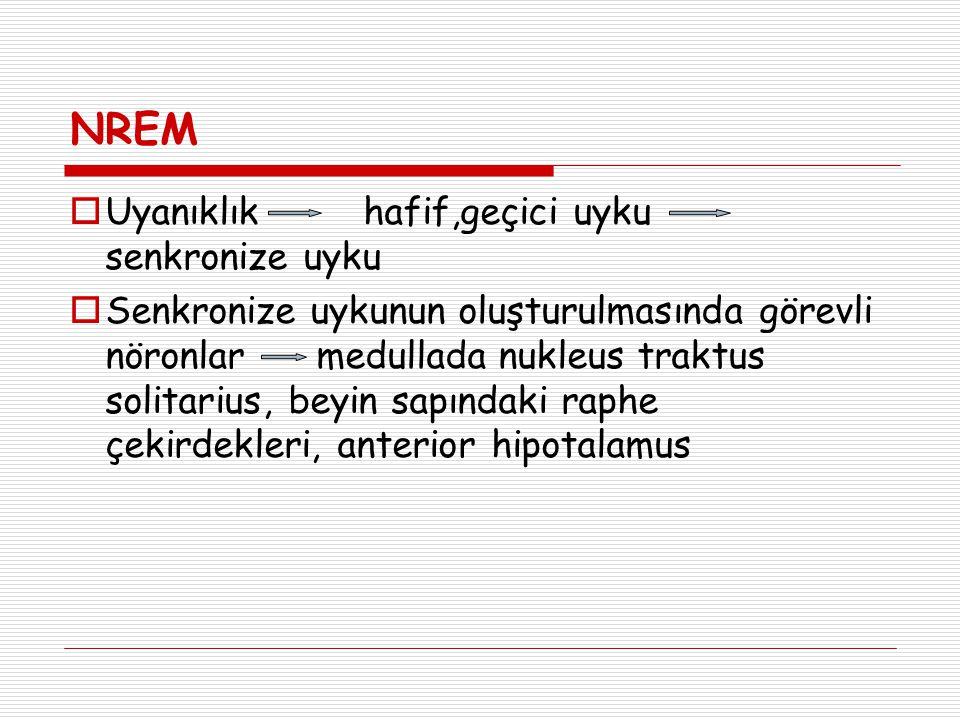 NREM  Uyanıklık hafif,geçici uyku senkronize uyku  Senkronize uykunun oluşturulmasında görevli nöronlar medullada nukleus traktus solitarius, beyin sapındaki raphe çekirdekleri, anterior hipotalamus