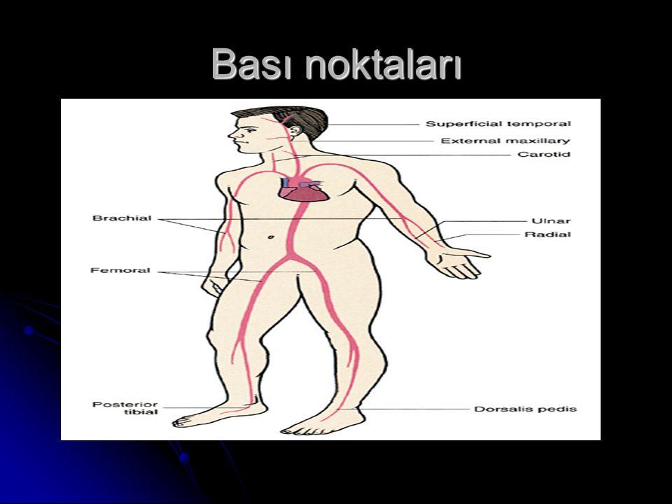 Important Pressure Points Brachial Brachial Femoral Femoral (