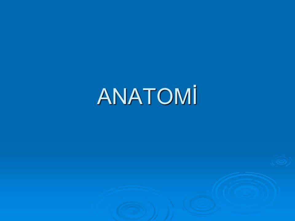 BANTIN GEÇTİĞİ NOKTALAR  Sinir ve damar geçişlerin bulunduğu obturator foramen  Bu foramene göre daha inferiomedialden geçen çengel ve bantın rotası