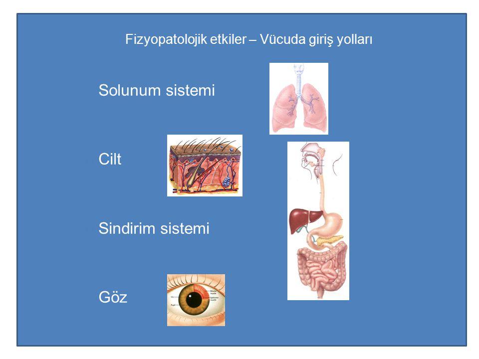 Fizyopatolojik etkiler – Vücuda giriş yolları Solunum sistemi Cilt Sindirim sistemi Göz