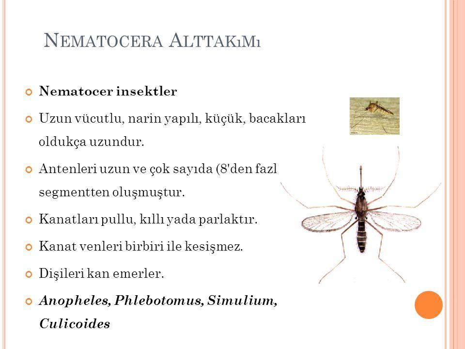 N EMATOCERA A LTTAKıMı Nematocer insektler Uzun vücutlu, narin yapılı, küçük, bacakları oldukça uzundur. Antenleri uzun ve çok sayıda (8'den fazla) se