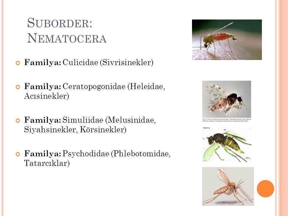 S UBORDER : N EMATOCERA Familya: Culicidae (Sivrisinekler) Familya: Ceratopogonidae (Heleidae, Acısinekler) Familya: Simuliidae (Melusinidae, Siyahsin