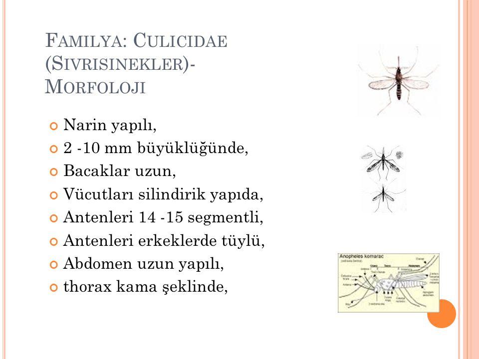 F AMILYA : C ULICIDAE (S IVRISINEKLER )- M ORFOLOJI Narin yapılı, 2 -10 mm büyüklüğünde, Bacaklar uzun, Vücutları silindirik yapıda, Antenleri 14 -15