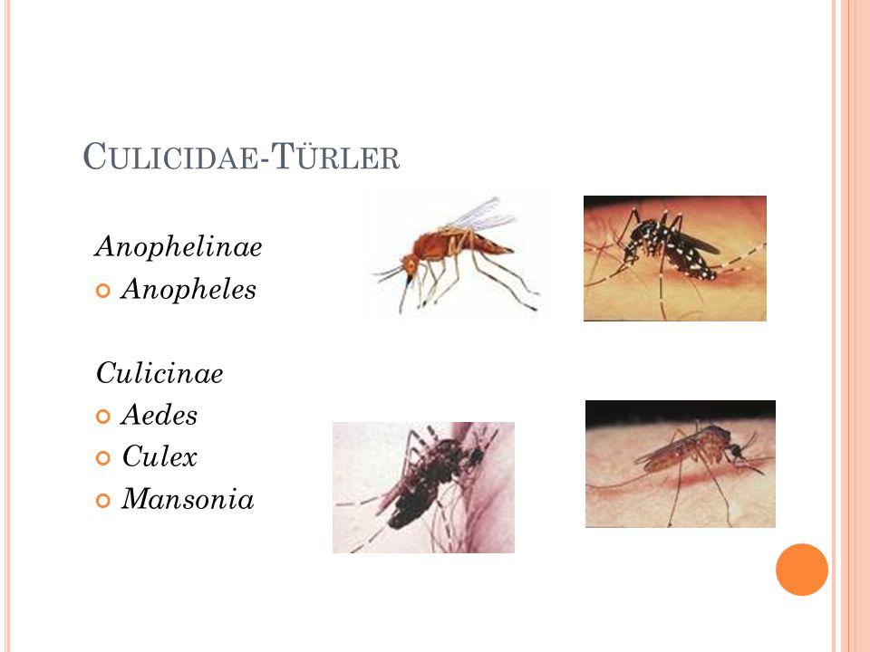 C ULICIDAE -T ÜRLER Anophelinae Anopheles Culicinae Aedes Culex Mansonia